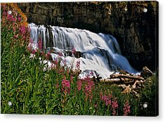 Fireweed Blooms Along The Banks Of Granite Creek Wyoming Acrylic Print