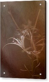 Acrylic Print featuring the photograph Fireweed by Liz  Alderdice