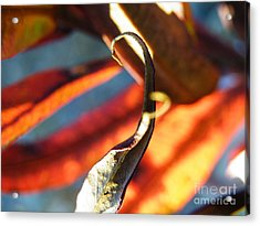 Fireweed Number 4 Acrylic Print by Brian Boyle