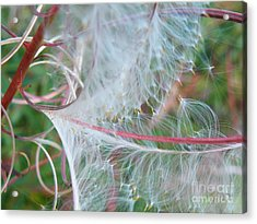 Fireweed Number One Acrylic Print by Brian Boyle