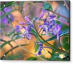 Fireweed Number Three Acrylic Print