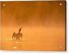 Fiery Wing Flap Acrylic Print by Tim Grams