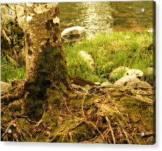 Firmly Rooted Acrylic Print by Bonnie Bruno