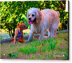 First Anniversary Image Angel And Chika Acrylic Print by Tina M Wenger