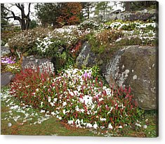 First Autumn Snow Acrylic Print by Barbara McDevitt