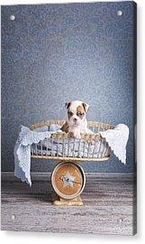 First Born Acrylic Print by Lisa Jane