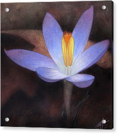 First Crocus Acrylic Print