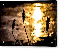 First Day Acrylic Print by Bob Orsillo