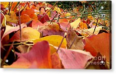 First Day Of Fall Acrylic Print by Andrea Anderegg