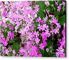 First Day Of Spring Acrylic Print by Andrea Anderegg