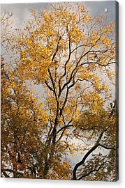 First Day Of Winter 2 Acrylic Print by Connie Fox