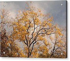 First Day Of Winter 3 Acrylic Print by Connie Fox