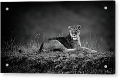 First Lady Acrylic Print by Mohammed Alnaser