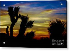 First Light Acrylic Print by Angela J Wright