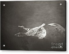 First Light On Mount Blanc Acrylic Print by Juergen Klust