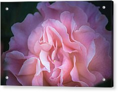 Acrylic Print featuring the photograph First Light by Patricia Babbitt