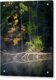 First Light Acrylic Print by Lana Trussell