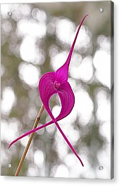 First Prize Acrylic Print by Rona Black