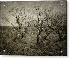 First Snow Acrylic Print by Amy Weiss