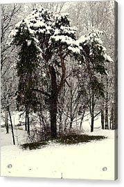 First Snow Acrylic Print by Henryk Gorecki