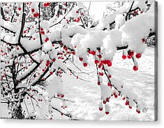 First Snow Acrylic Print by Michelle and John Ressler