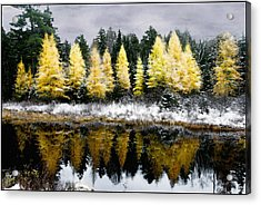 Acrylic Print featuring the photograph Tamarack Under A Painted Sky by Wayne King