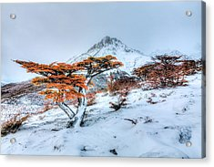 First Snow Acrylic Print by Roman St