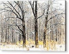 First Snow. Tree Brothers Acrylic Print by Jenny Rainbow