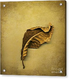 First To Fall Acrylic Print by Jan Bickerton