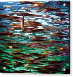 Fish 1 Acrylic Print by Dawn Eshelman