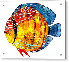Fish 502-11-13 Marucii Acrylic Print