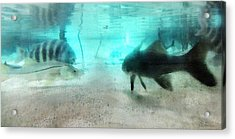 Fish By Sharon Cummings Acrylic Print by William Patrick