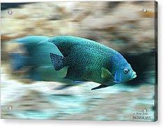 Fish Acrylic Print by Christine Sponchia