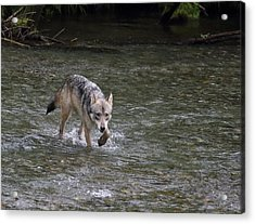 Fish Creek Wolf Acrylic Print