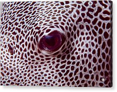 Fish Eye Acrylic Print