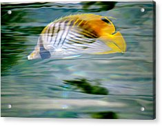 Fish In The Sunlight Acrylic Print by Lehua Pekelo-Stearns