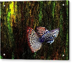 Fish Kingdom Colors  Acrylic Print by Mario Perez