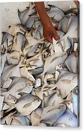 Fish Market Acrylic Print by Money Sharma