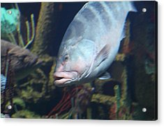 Fish - National Aquarium In Baltimore Md - 1212106 Acrylic Print