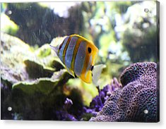 Fish - National Aquarium In Baltimore Md - 1212111 Acrylic Print by DC Photographer