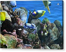 Fish - National Aquarium In Baltimore Md - 1212113 Acrylic Print by DC Photographer