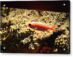 Fish - National Aquarium In Baltimore Md - 1212118 Acrylic Print by DC Photographer