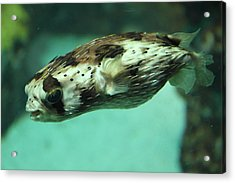 Fish - National Aquarium In Baltimore Md - 1212137 Acrylic Print by DC Photographer