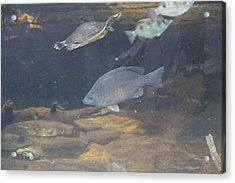 Fish - National Aquarium In Baltimore Md - 1212146 Acrylic Print