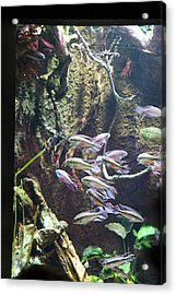 Fish - National Aquarium In Baltimore Md - 121222 Acrylic Print by DC Photographer
