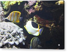 Fish - National Aquarium In Baltimore Md - 121239 Acrylic Print by DC Photographer