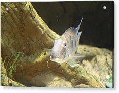 Fish - National Aquarium In Baltimore Md - 121248 Acrylic Print