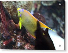 Fish - National Aquarium In Baltimore Md - 121272 Acrylic Print by DC Photographer