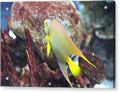 Fish - National Aquarium In Baltimore Md - 121273 Acrylic Print