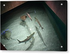 Fish - National Aquarium In Baltimore Md - 121283 Acrylic Print by DC Photographer